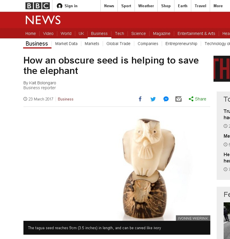 How an obscure seed is helping to save the elephant